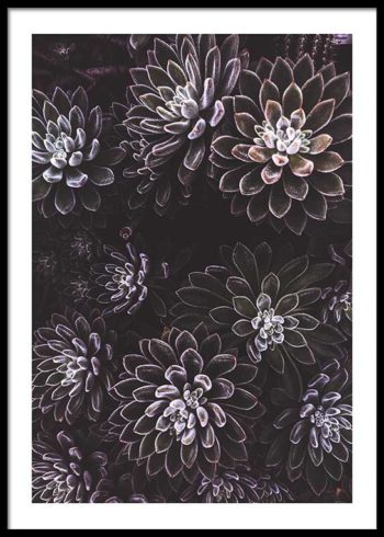 PURPLE SUCCULENTS POSTER