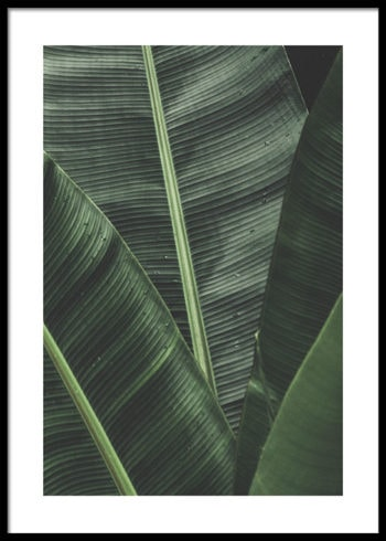 PALM LEAVES LAYERS POSTER