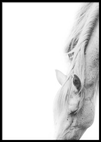 WHITE HORSE GRACING POSTER